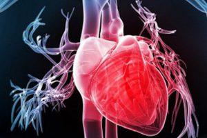 Nội tiết & tim mạch